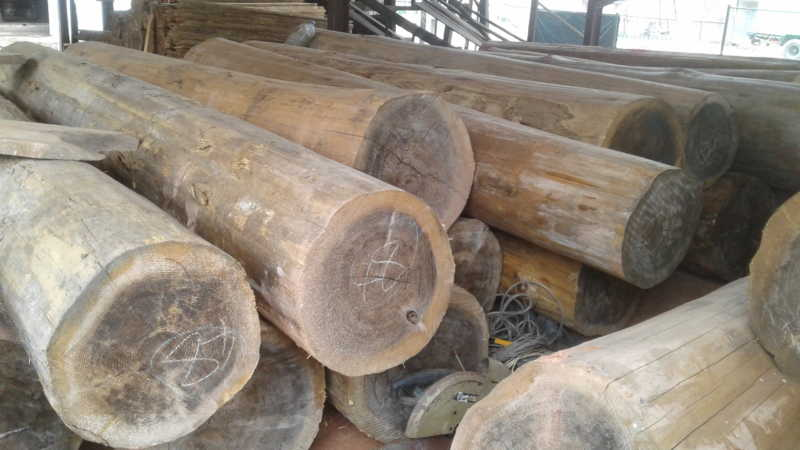Imported Cypress logs, Wholesale and Retail